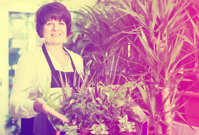 Download Glad Assistant Tending Numerous Green Plants Stock Photo - Image: 83702191
