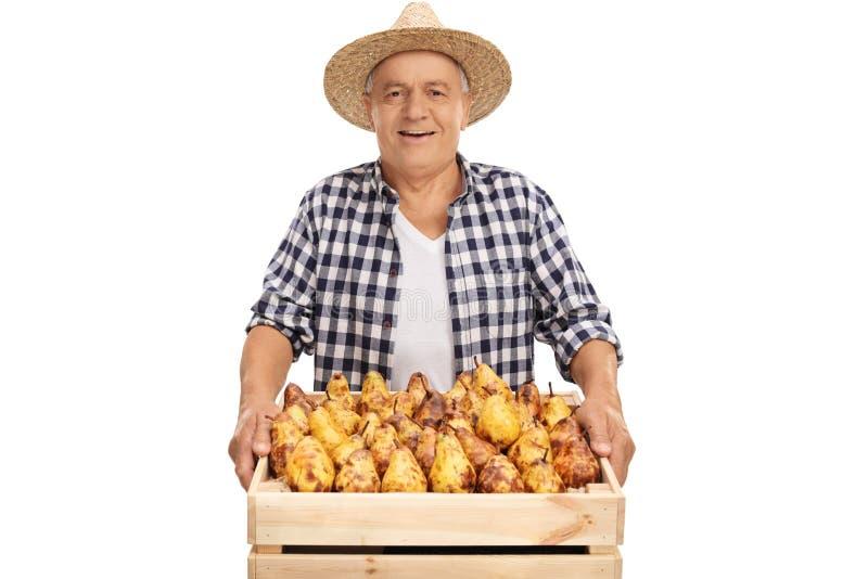 Glad hög bonde som rymmer en spjällåda full av päron royaltyfria bilder