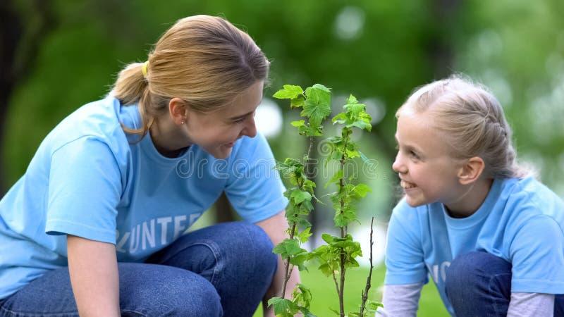 Glad honlig volontär som leker med dotterplanteringsträd i skog, ekosystem arkivfoto