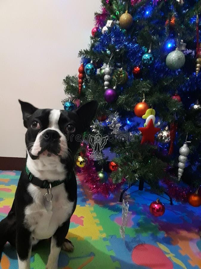 Glad hundjul arkivfoto