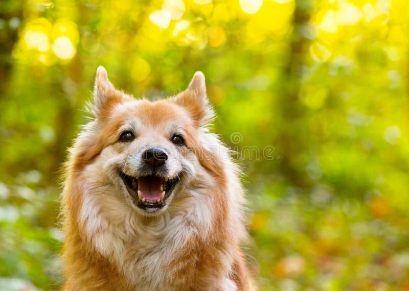 Glad, leende hund royaltyfri bild