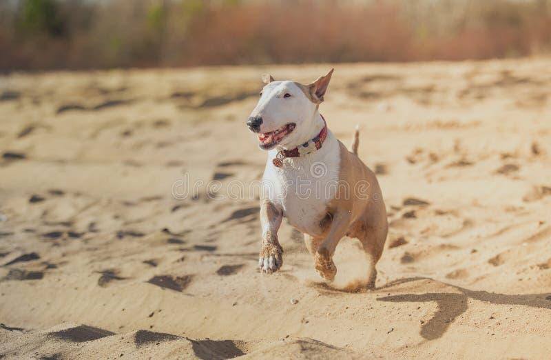 Glad spring och spela för hund royaltyfri foto
