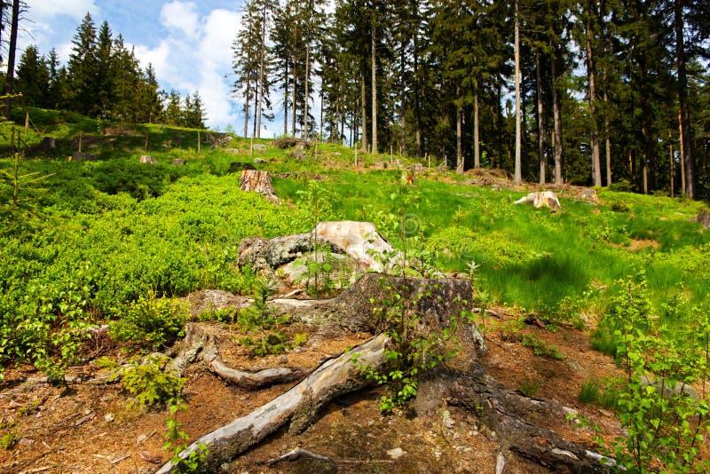 Download Glade stock foto. Afbeelding bestaande uit outdoors, bosbes - 54088288