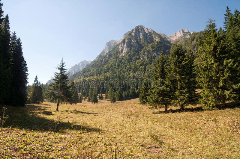 Glade in the Bucegi Mountains. View from Costila Glade (Poiana Costilei) to Bucegi Mountains in a sunny day. Bucegi Mountain is a part of Romanian Carpathians stock photos