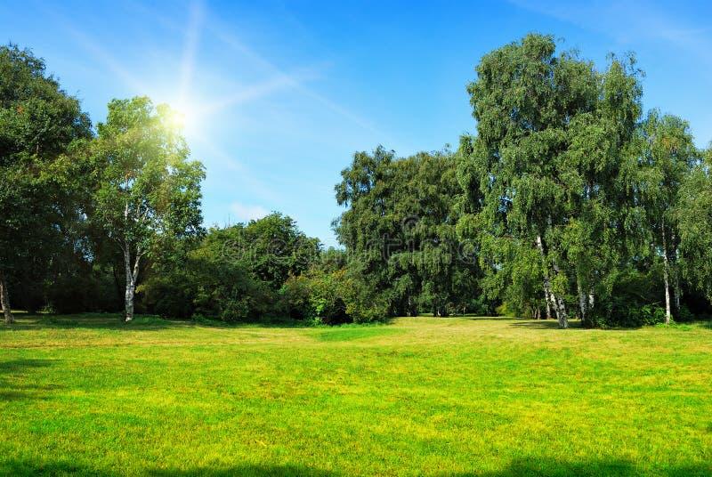 Glade com árvores e o sol verdes imagens de stock
