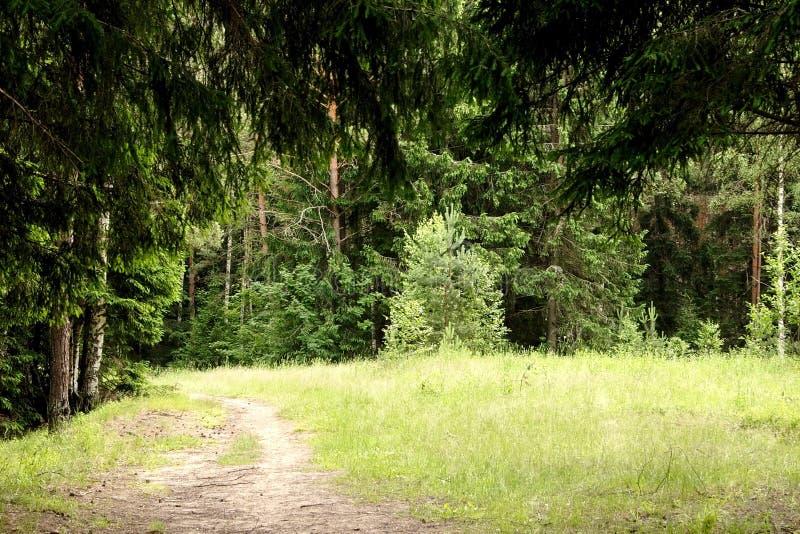 Glade da floresta imagens de stock