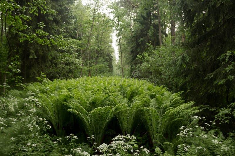 Glade della foresta fotografia stock libera da diritti