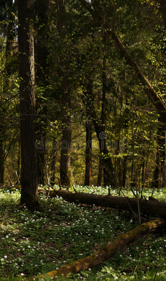 Glade della foresta fotografia stock