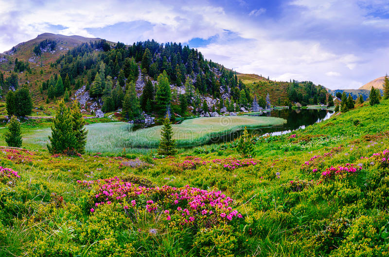 Download Glade With Flowers Near The Water In Mountains Stock Photo