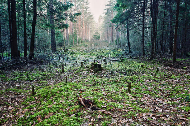 Glade. A glade in the forest royalty free stock image