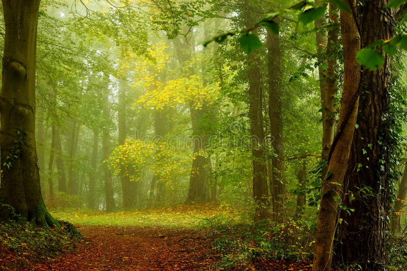 Glade in the forest in a autumn morning with fog. Nice picture in beginning of autumn showing a glade in the forest to which a trail covered by leaves is going stock images