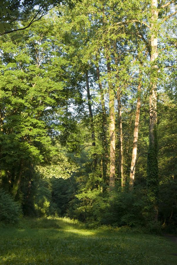 Download Glade in sunlit wood stock image. Image of summertime - 11314007