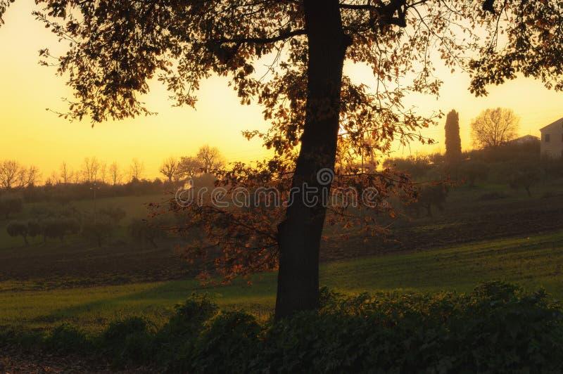 Glade at sunset stock photos