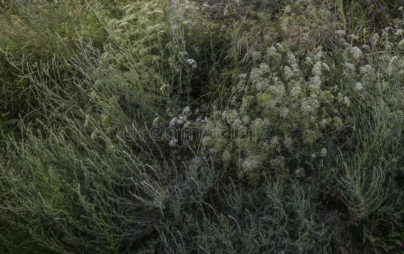 Glade of wild herbs stock images