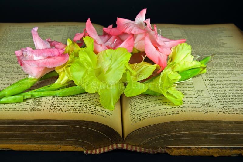 Gladiola на библии сбора винограда стоковые изображения rf