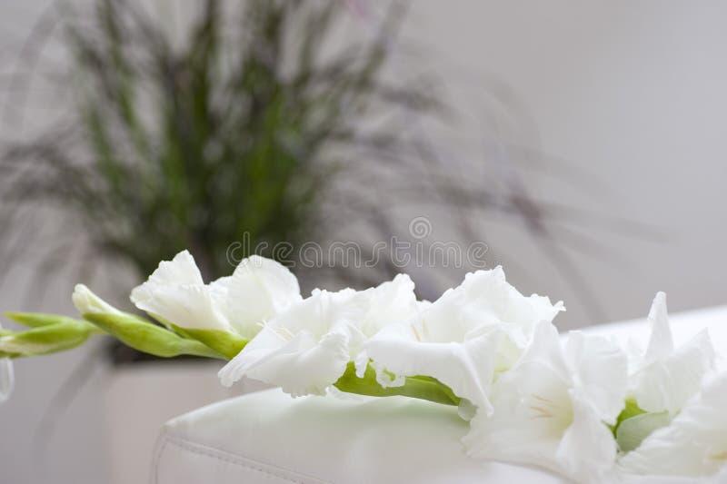 Gladiola blomma på underlag royaltyfri foto