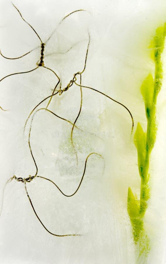 Gladiola congelado e fio fotos de stock