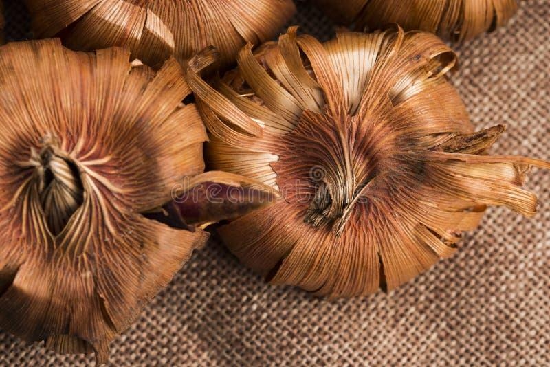 Gladiola kulor royaltyfria foton
