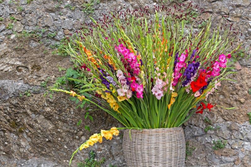 Gladiolabloemen in roze purper geel rood wit in mand opnieuw stock afbeeldingen