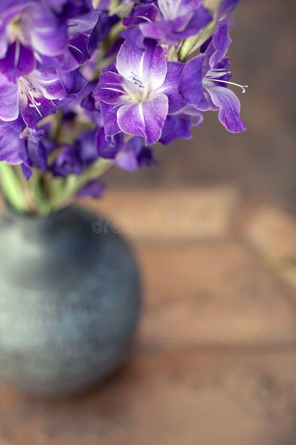 Gladiolas stock photos