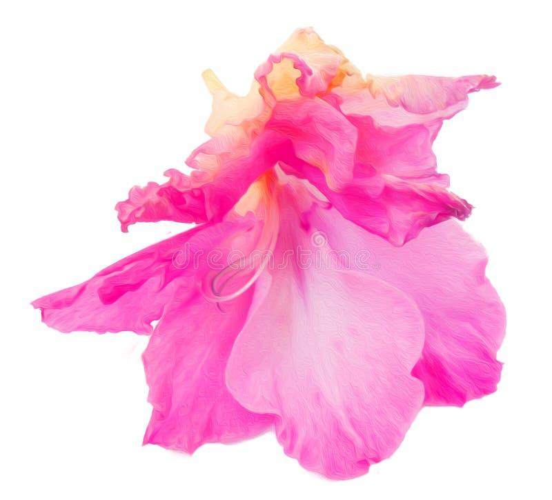 Gladiolenbloem bij het witte digitale schilderen wordt geïsoleerd die royalty-vrije stock afbeelding