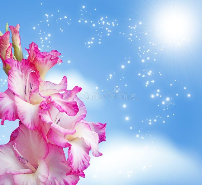 Gladiolus blossom royalty free stock image