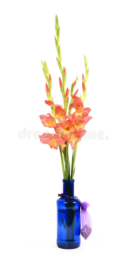 Download Gladiolus Branch stock photo. Image of yellow, botany - 20055278