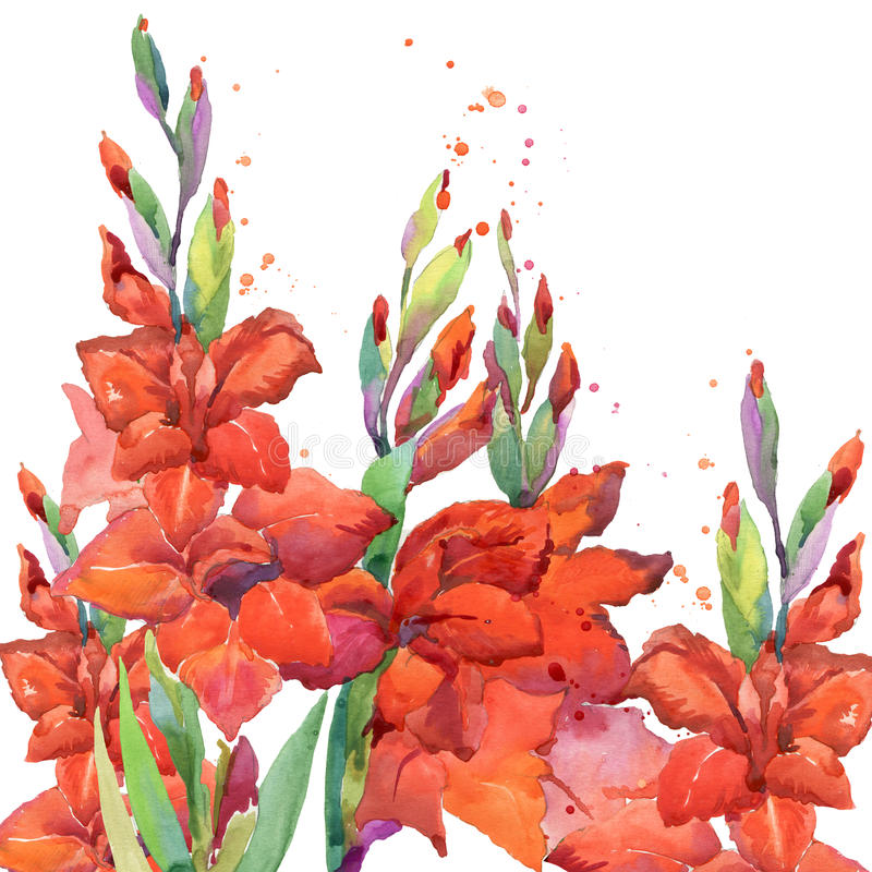 Gladiolus flower watercolor background. Summer garden flowers watercolor illustration vector illustration