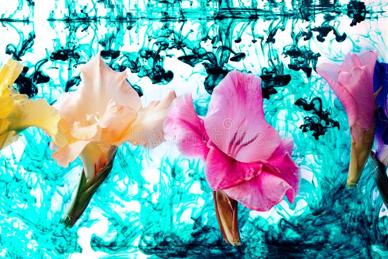 Gladiolus flowers under water with blue ink. royalty free stock photos