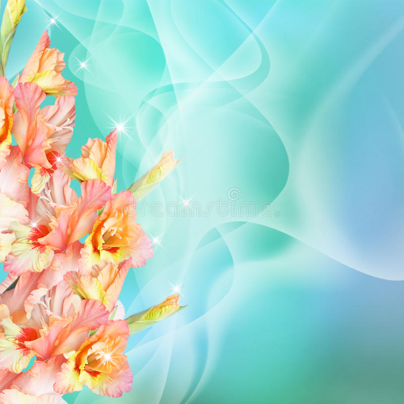 Gladiolus and stars royalty free stock images