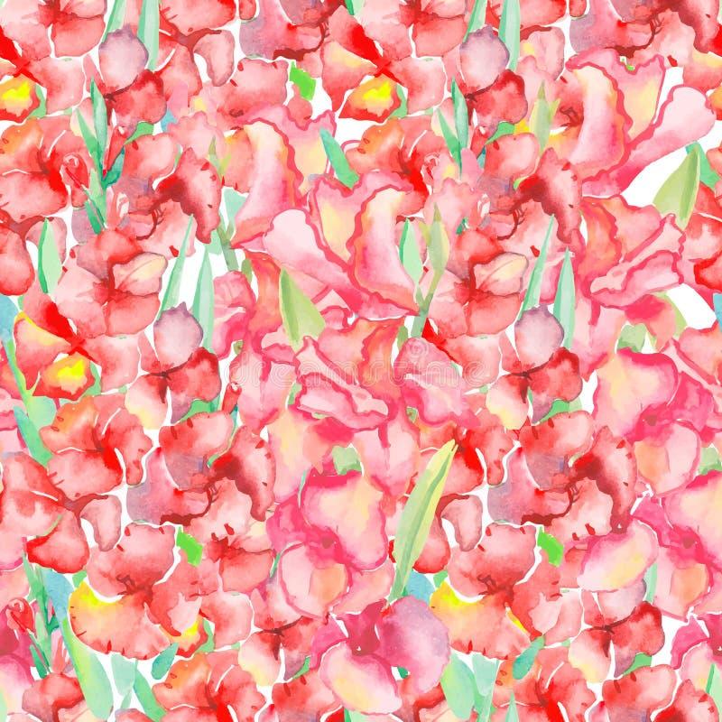 gladiolus Teste padrão floral ilustração royalty free