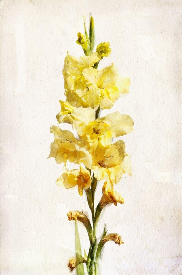 gladiolusa akwareli kolor żółty ilustracja wektor
