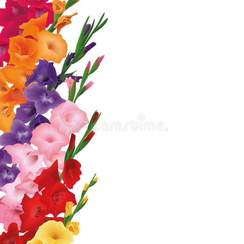 Gladioluseskaart Copyspace, plaats voor tekst de bloemen van de zwaardlelie Vectorkaartillustratie geel, rood, roze, purper stock illustratie