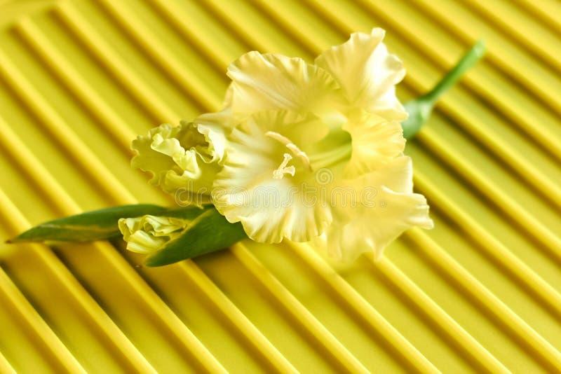 Gladioluys amarelos no fundo amarelo da textura foto de stock royalty free