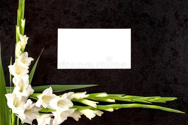 Gladioly fleurit avec le papier blanc pour l'avis de nécrologie image stock