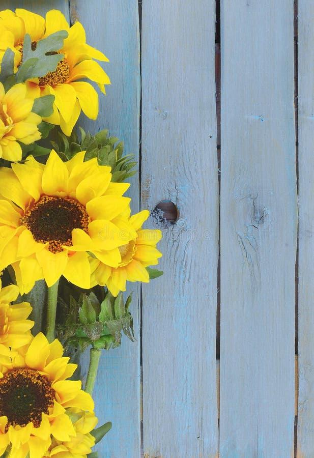 Gladlynt blom- med ljusa gula siden- solrosor som skapar en gräns på en lantlig blått, tvättade plankabakgrund arkivbilder