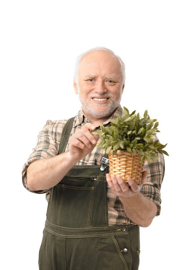 Gladlynt gammalare le för manholdingväxt arkivfoto