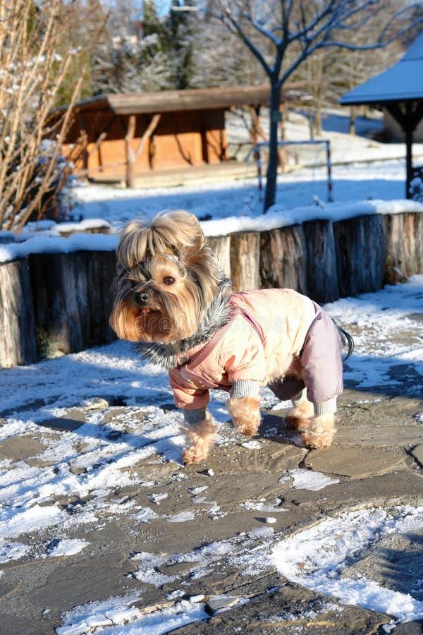Gladlynt hund i färgerna av vårdagen fotografering för bildbyråer