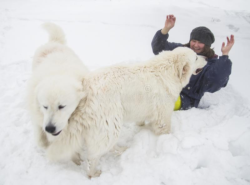 Gladlynt kvinna som spelar med vit hundkapplöpning i snön royaltyfri bild
