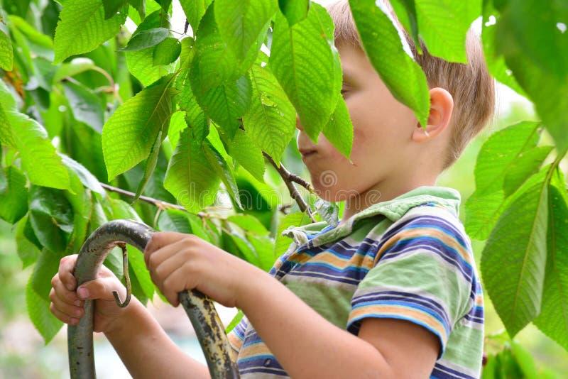 Gladlynt och gladlynt pojke på trappan i trädgården som äter ett körsbärsrött träd på ett träd fotografering för bildbyråer
