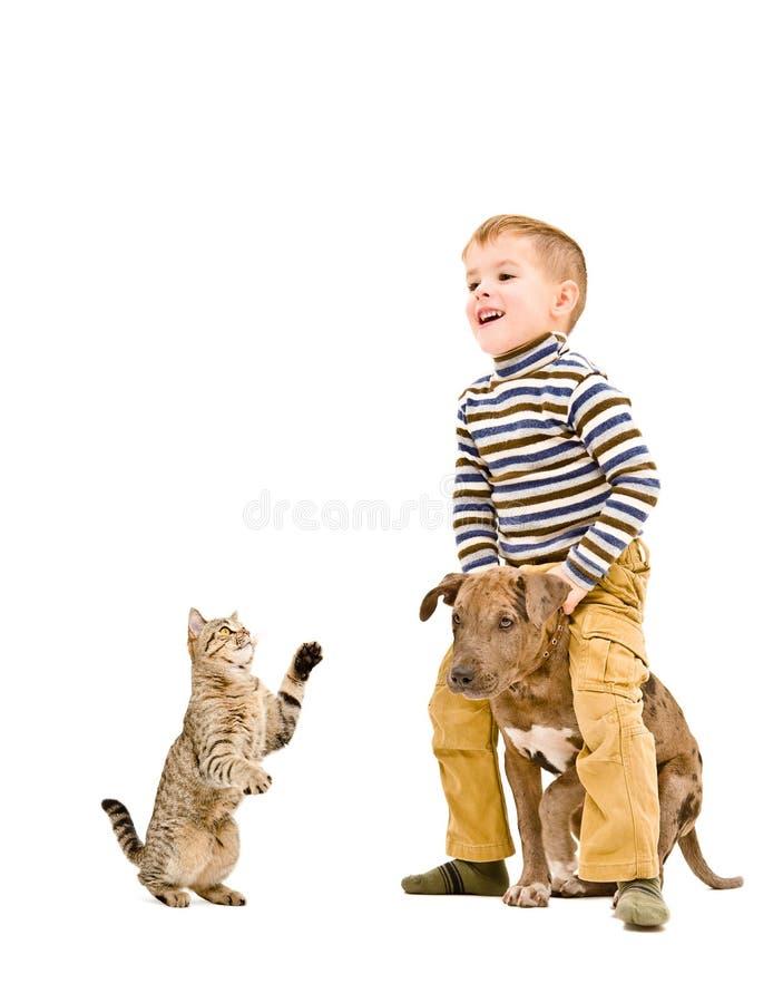 Gladlynt pojke som spelar med en valp och en katt royaltyfri fotografi
