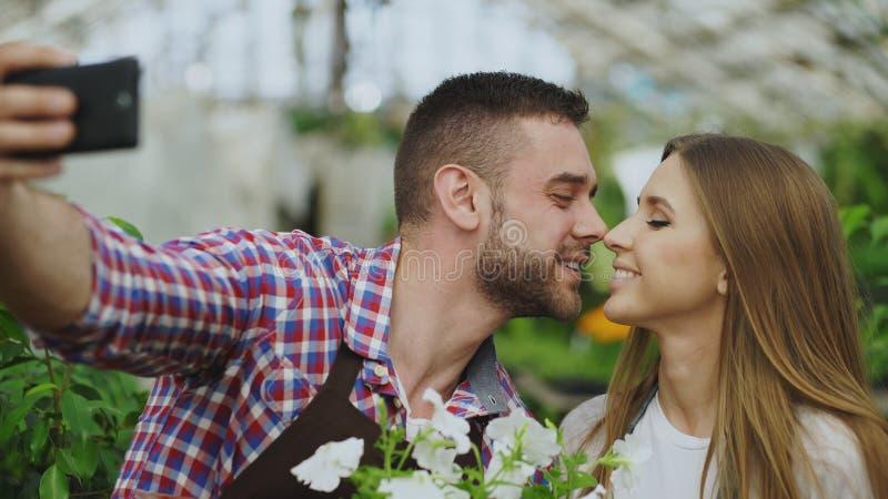 Gladlynta älska parträdgårdsmästare som tar selfiebilden på smartphonekamera och kysser, medan arbeta i växthus royaltyfri fotografi
