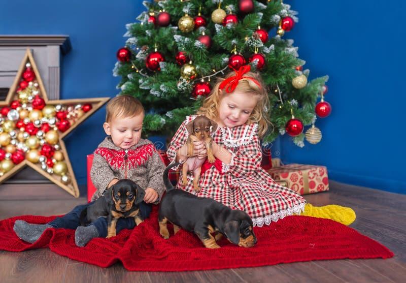 Gladlynta små barn spelar med valpar, medan sitta nära en julgran skjutit hemma arkivfoto