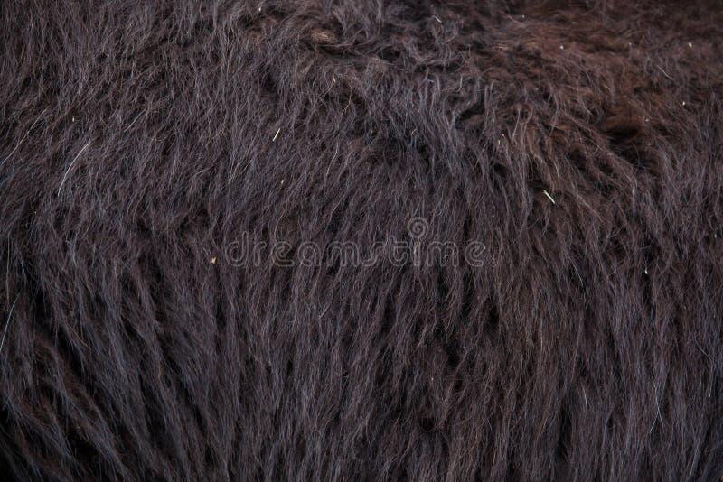 Download Glama лама ламы абстрактная текстура шерсти конца предпосылки вверх Стоковое Фото - изображение насчитывающей черный, чили: 81810322