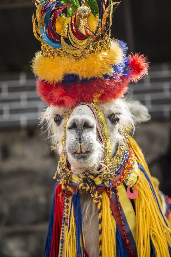 Glama da Lama - animal característico de Ipiales imagem de stock royalty free