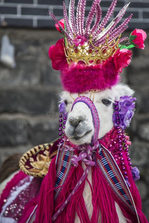 Glama da Lama - animal característico de Ipiales fotos de stock royalty free