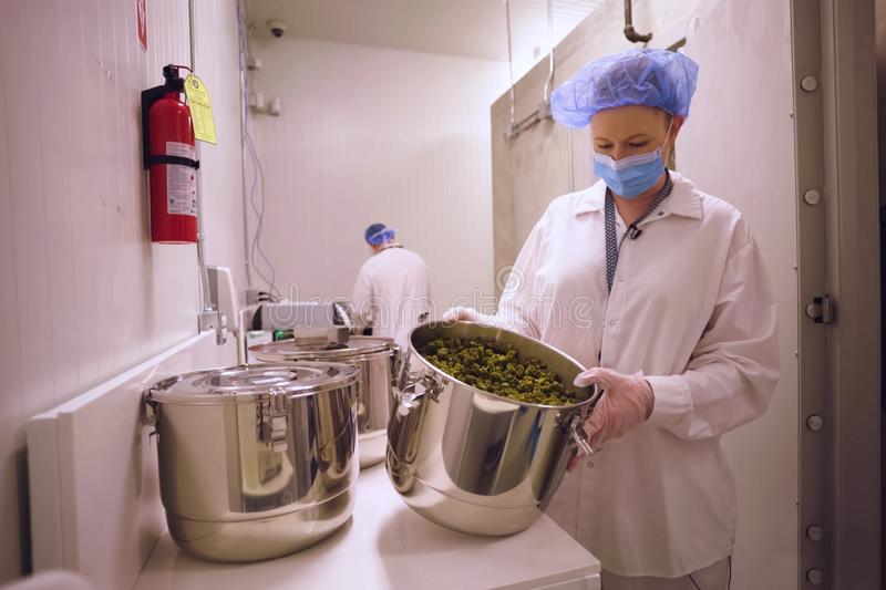 Laboratory for quality control of grown cannabis for medical purposes. Picking marijuana. Glamis, USA - August 24, 2018: Laboratory for quality control of grown stock photos