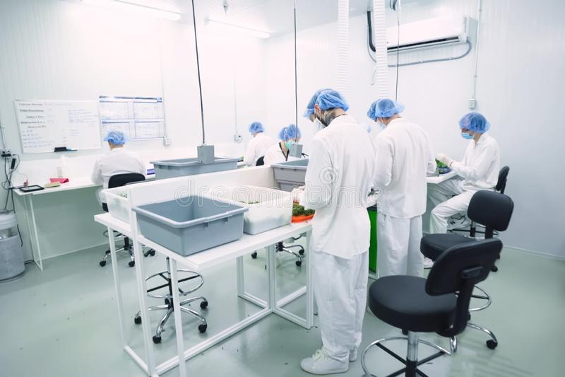 Laboratory for quality control of grown cannabis for medical purposes. Picking marijuana. Glamis, USA - August 24, 2018: Laboratory for quality control of grown royalty free stock photos