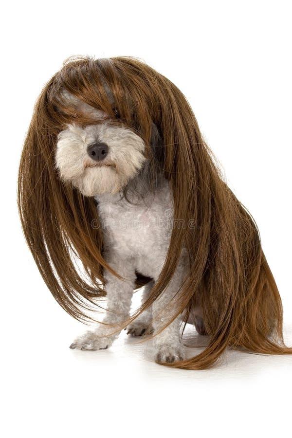 Free Glamour Dog Royalty Free Stock Photography - 832627