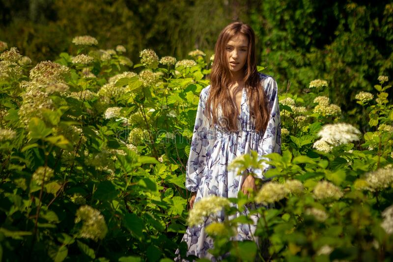 Glamour young lady posing in the field flowers in dress with print stock photography
